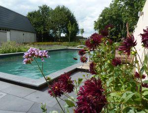 natuurlijk zwembad Boxmeer