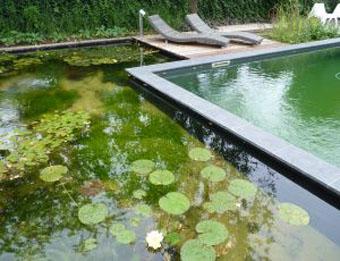 zwemvijver Rosmalen florijk