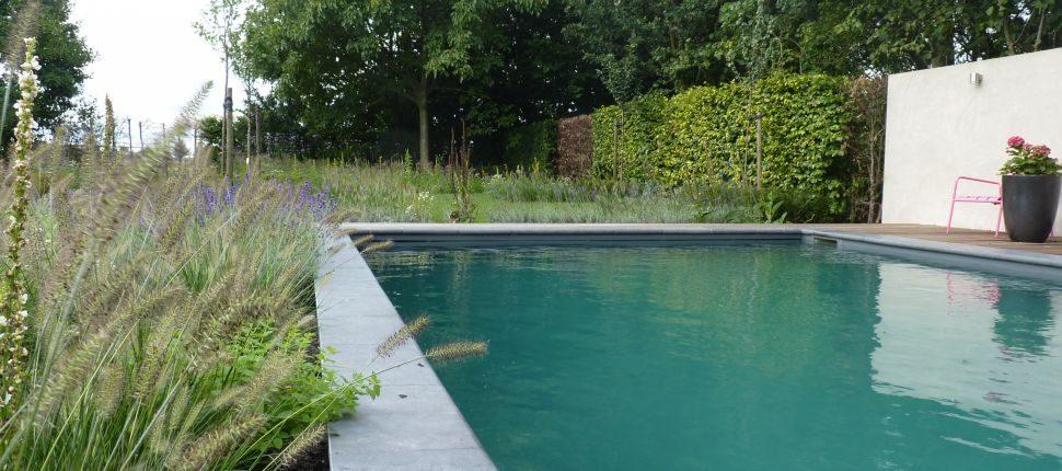 natuurlijk zwembad Boxmeer1