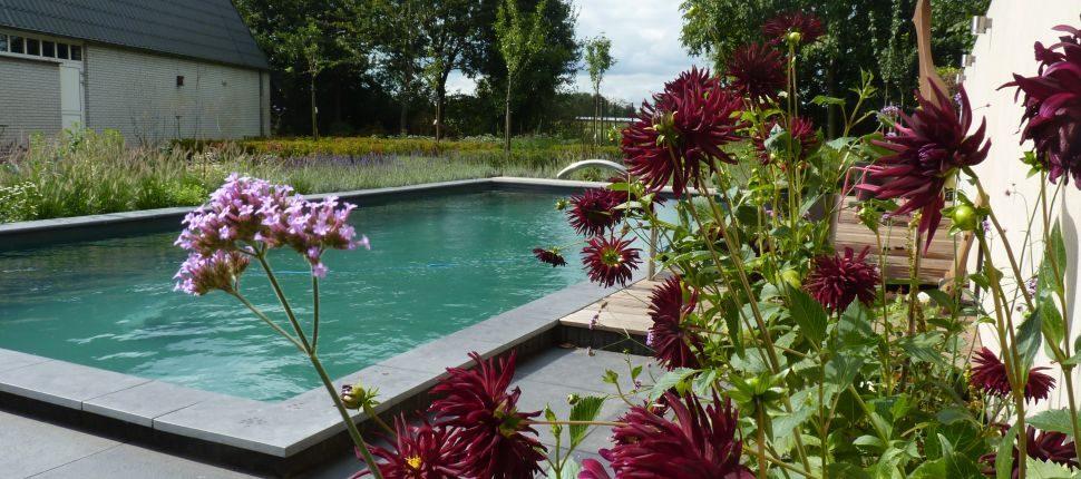natuurlijk zwembad Boxmeer2