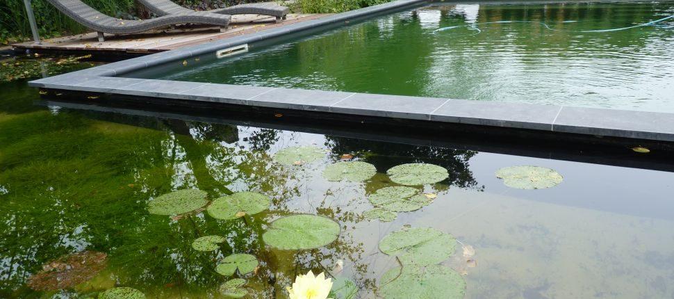 Natuurlijke zwemvijver Rosmalen