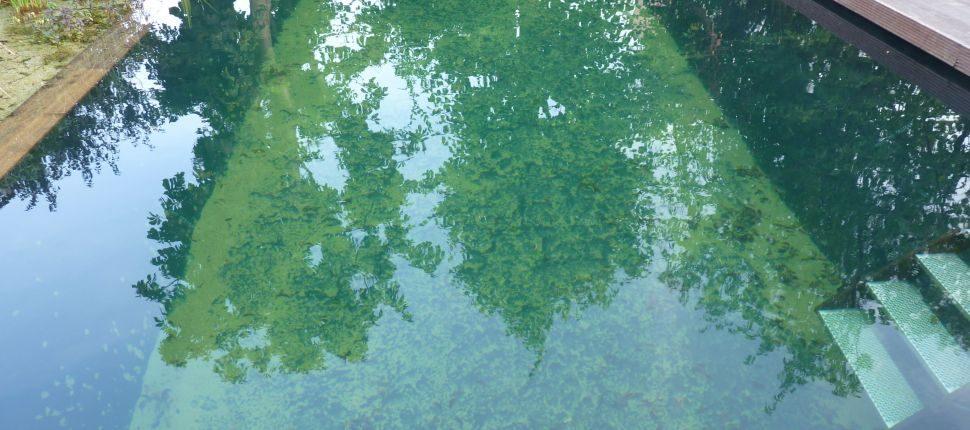 zwemvijver Waalwijk3